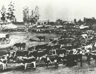President Burgers se woning links 1880 k